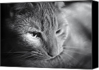 Black And White Cats Canvas Prints - Relaxing Kitty Canvas Print by Patrick M Lynch