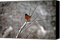 Karen Adams Canvas Prints - Robin in Winter Canvas Print by Karen Adams