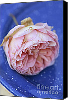 Botanicals Canvas Prints - Rose Flower Canvas Print by Frank Tschakert