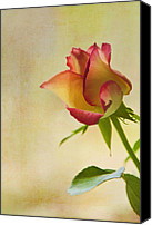 Rose Digital Art Canvas Prints - Rose Canvas Print by Veikko Suikkanen