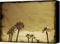 Dark Special Promotions - Sahara Palms Canvas Print by Amyn Nasser