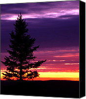 Copper Harbor Canvas Prints - Silhouetted tree Canvas Print by Michael P Ray