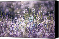 Jenny Rainbow Canvas Prints - Silver Grass 1. Small Natural Wonders Canvas Print by Jenny Rainbow