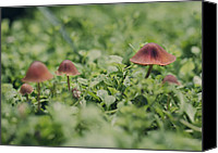 Toadstools Canvas Prints - Slightly Magical Mushrooms Canvas Print by Heather Applegate