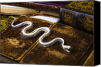 Library Canvas Prints - Snake skeleton and old books Canvas Print by Garry Gay