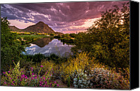 Golf Course Canvas Prints - Sonoran Desert Spring Bloom Sunset  Canvas Print by Scott McGuire
