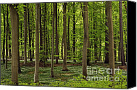 Forest Floor Canvas Prints - Spring Forest Canvas Print by Inge Riis McDonald