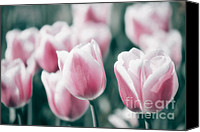 Pink Tulips Canvas Prints - Spring in Love Canvas Print by Angela Doelling AD DESIGN Photo and PhotoArt