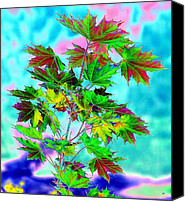 Abstract Photo Canvas Prints - Spring Maple Leaf Design Canvas Print by Will Borden