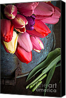 Fielding Canvas Prints - Spring Tulips Canvas Print by Edward Fielding