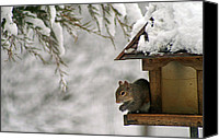 Karen Adams Canvas Prints - Squirrel on the Bird Feeder Canvas Print by Karen Adams