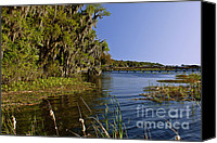 Rape Canvas Prints - St Johns River Florida Canvas Print by Christine Till
