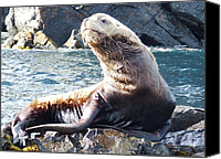 Kodiak Canvas Prints - Steller Sea Lion Canvas Print by Penelope Cyr-Lorenson