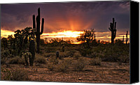 Bold Colors Canvas Prints - Sun Rays Over the Sonoran Desert  Canvas Print by Saija  Lehtonen