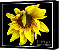 Droopy Canvas Prints - Sunflower 1 Canvas Print by Rose Santuci-Sofranko