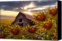 Rural Scenes Canvas Prints - Sunflower Dance Canvas Print by Debra and Dave Vanderlaan