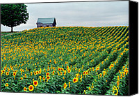 Old Country Roads Canvas Prints - Sunflower Field in West Michigan Canvas Print by James Rasmusson