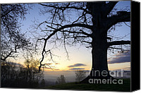 Quercus Canvas Prints - Sunrise White Oak and Fog Canvas Print by Thomas R Fletcher