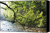 Rushing Mountain Stream Canvas Prints - Sycamore Branch and Williams River Canvas Print by Thomas R Fletcher