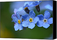 "\""forget Me Not Flowers\\\"" Canvas Prints - Tearful Goodbye Canvas Print by Lisa Knechtel"