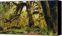 Moss Photo Special Promotions - The Deep and The Dark Canvas Print by Stuart Deacon