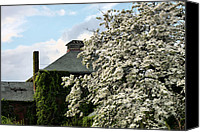 Trees Blossom Canvas Prints - The Dogwood  Canvas Print by JC Findley