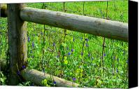 Mary Deal Canvas Prints - The Fence at the Meadow Canvas Print by Mary Deal