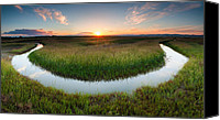 Swamp Canvas Prints - The Necklace Canvas Print by Evgeni Dinev