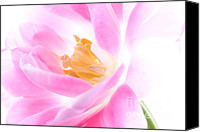 Bloom Special Promotions - Time for a tulip Canvas Print by Mark Johnson