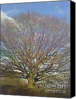 Photo Photo Special Promotions - Tree Canvas Print by Janet Watson