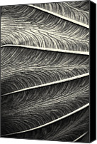 Joseph Duba Canvas Prints - Tropical Leaf No.1 2009 v.2 Canvas Print by Joseph Duba