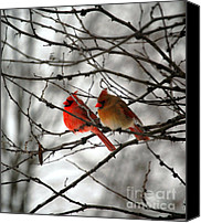 Cardinals. Wildlife. Nature. Photography Canvas Prints - TRUE LOVE CARDINAL BIRDS Northern Cardinal Birds Male and Female Roosting Canvas Print by Peggy  Franz