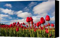 Matt Dobson Canvas Prints - Tulip Field Canvas Print by Matt Dobson