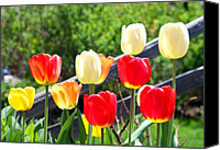 Leaves Special Promotions - Tulips Aglow Canvas Print by James Hammen