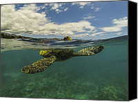 Brad Scott Canvas Prints - Turtles need air too Canvas Print by Brad Scott