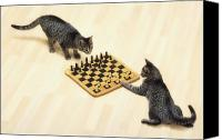 Chess Piece Canvas Prints - Two Grey Tabby Cats Playing Canvas Print by Thomas Kitchin & Victoria Hurst