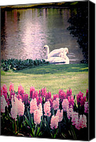 Beautiful Pink Flowers Canvas Prints - Two Swans Canvas Print by Jasna Buncic