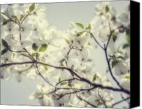 Lisa Russo Canvas Prints - Under the Dogwood Canvas Print by Lisa Russo