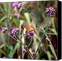 Karen Adams Canvas Prints - Variegated Fritillary Butterfly Canvas Print by Karen Adams