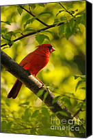 Red Cardinal Canvas Prints - Watching The Sun Set Canvas Print by Lois Bryan