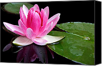 Lotus Pond Canvas Prints - Water Lily Canvas Print by Elizabeth Budd