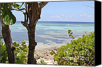 Grand Cayman Canvas Prints - Waters Edge Canvas Print by Carey Chen