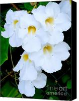 Mary Deal Canvas Prints - White Thunbergia on the Fence Canvas Print by Mary Deal