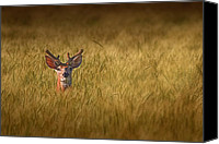 Scared Canvas Prints - Whitetail Deer in Wheat Field Canvas Print by Tom Mc Nemar