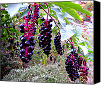 Featured Glass Art Canvas Prints - Wild Berry Canvas Print by  George Griffiths