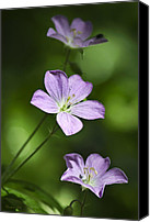Wild Geranium Canvas Prints - Wild Geranium Canvas Print by Christina Rollo