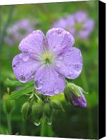 Wild Geranium Canvas Prints - Wild Geranium Canvas Print by John Burk