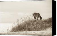 Wild Animal Canvas Prints - Wild Horse on the Outer Banks Canvas Print by Diane Diederich