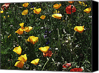 Floral Digital Art Special Promotions - Wildflower Fields Canvas Print by Michael Genova