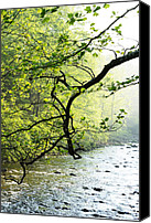 Rushing Mountain Stream Canvas Prints - Williams River Mist Canvas Print by Thomas R Fletcher